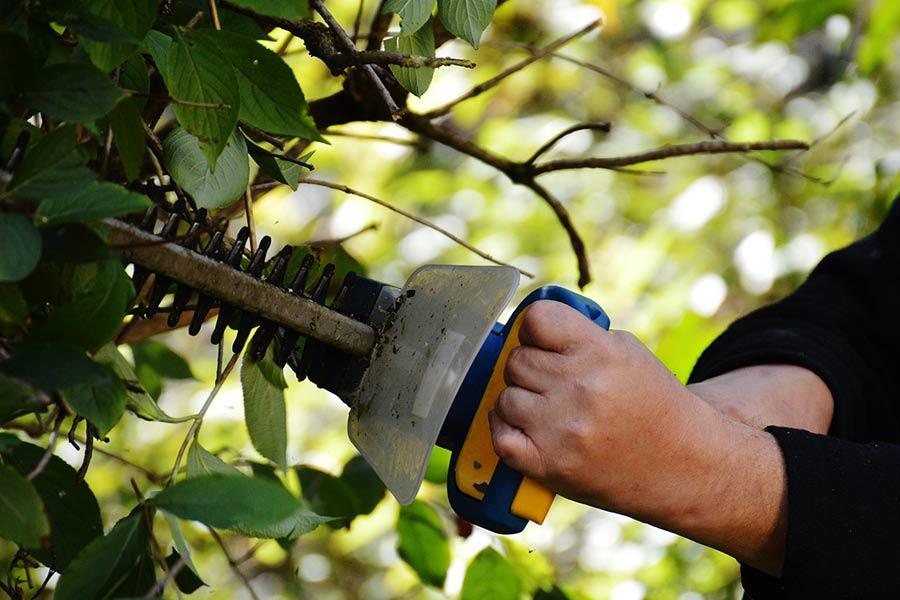 Elektryczne nożyce do żywopłotu. Świetnie sprawdzają się podczas modelowania drzew i krzewów oraz przycinania żywopłotu.